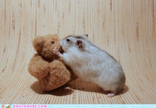 Hamster and Bear: A Kiss, Pet Portraits, Funny Animal Pics, Teddy Bears, Funny Animal Photo, Hamsters, Valentines Day, Funny Stuff, Faces Off