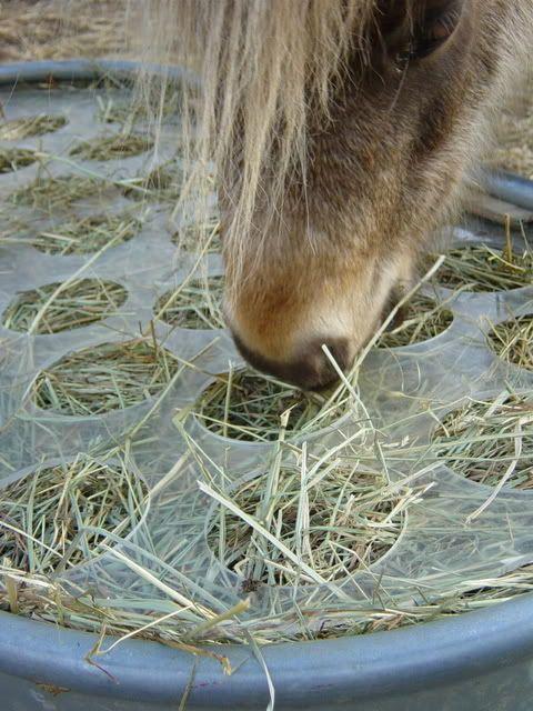 "Slow feeder/no waste hay feeder.  Slow feeder/no waste hay feeder.  1/4"" plexiglass with 4"" holes.  I wanna make one!"