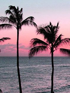 #veronikamaine #tropical #vacation #inspiration #summer13 #sunset #palmtree
