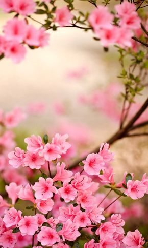 Spring is smiling to us..... Aline♥