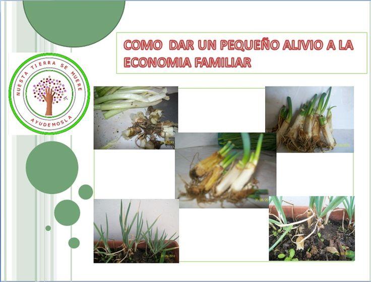 cultivo sin semilla