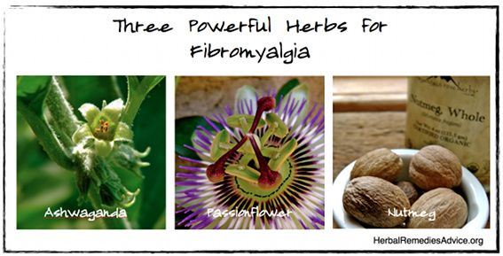 Several kinds of herbs can be used as part of a fibromyalgia natural treatment.