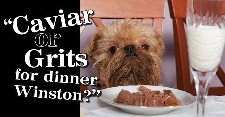 Best Dog Food Brand For Australian Shepherds