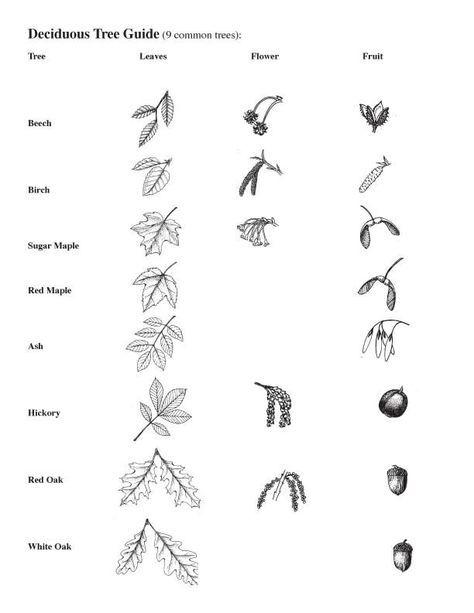 Großartig Tierzelle Malvorlagen Fotos - Framing Malvorlagen ...
