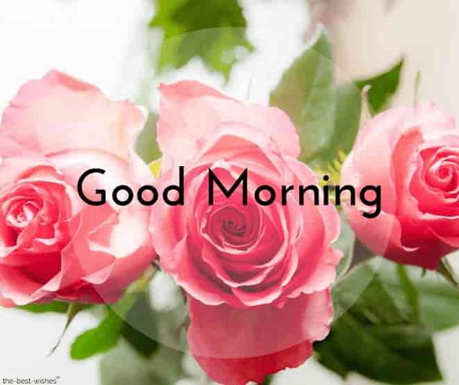 Cute Good Morning With Rose Good Morning Images Good Morning Flowers Lovely Good Morning Images