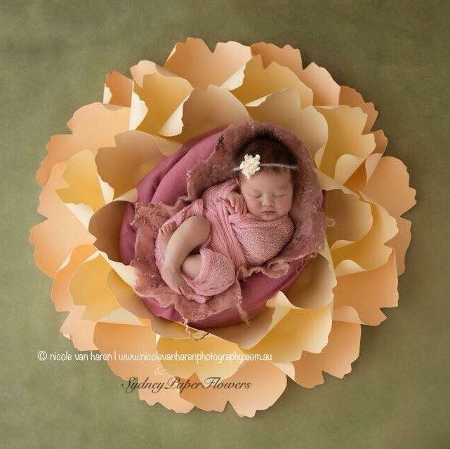 Are you a professional photographer and looking for an additional WOW item for your props collection? Do not look further! Try our Newborn posing paper peony. Wide range of colours available. We ship worldwide. https://www.etsy.com/au/listing/259692243/newborn-posing-paper-flower-photoprop?ref=related-1
