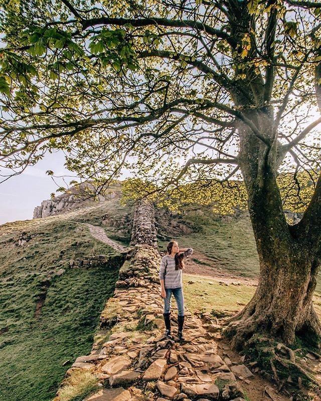 Exploring near the Robin Hood Tree | Sycamore Gap, England