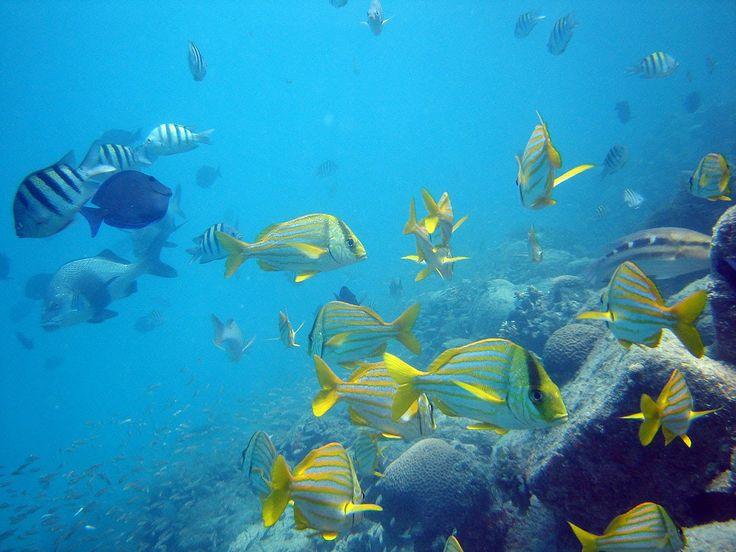 Prado (BA) se consolida como destino para prática de mergulho