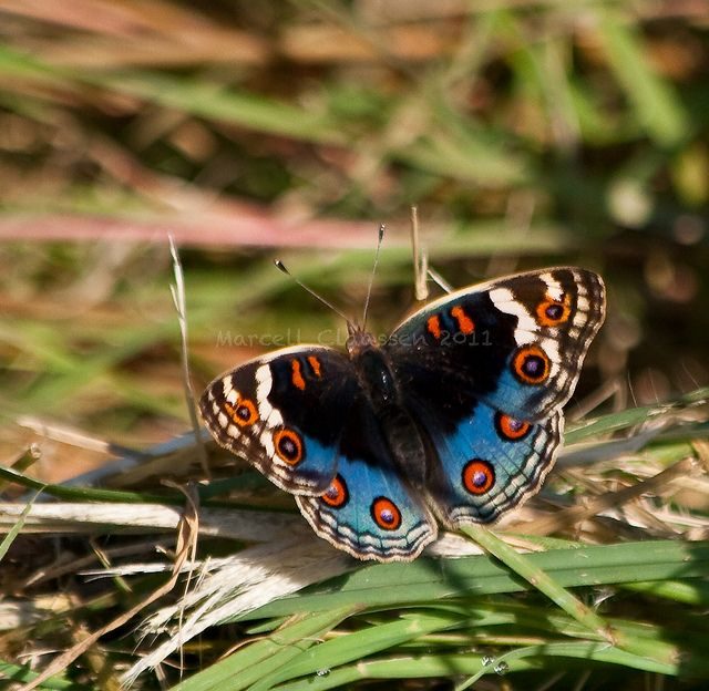 Butterfly 6194 Potchefstroom (South Africa) | Flickr - Photo Sharing!