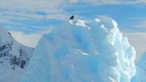 #Antarktyda #Antarctica