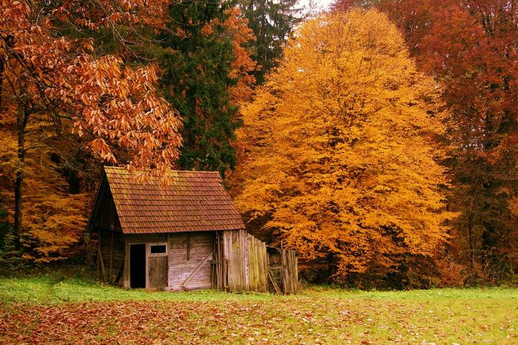 forest house  Top 10 Most Beautiful Forest Houses