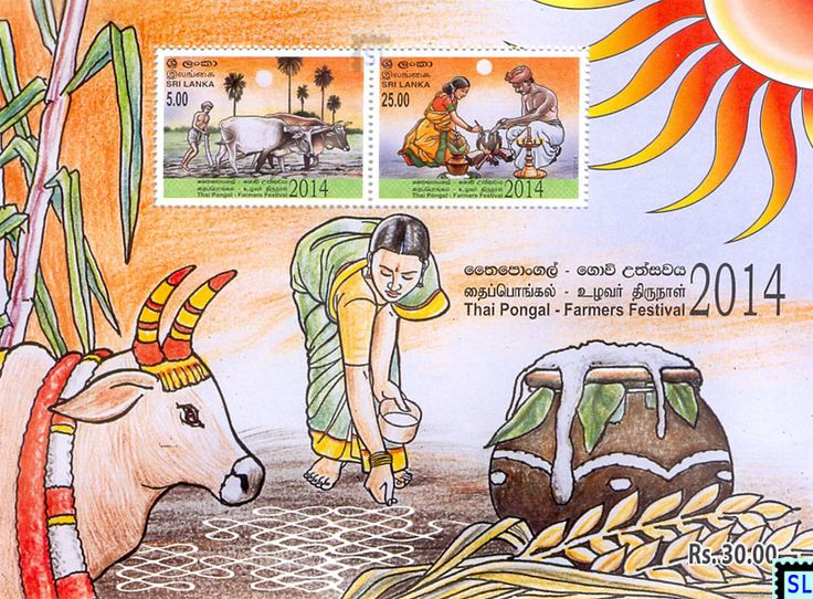 Image result for farmer harvesting for pongal | Pongal in ...