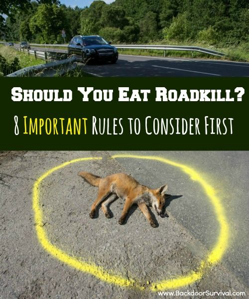 Should You Eat Roadkill? 8 Important Rules to Consider First #Survival #Preppers