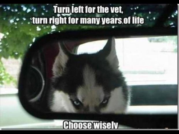 Choose wisely haha...I love huskies