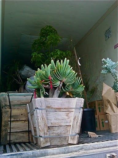 26 best Australian Native Garden Ideas images on Pinterest