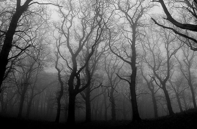 Mist in the woods - gloomy day!****Follow our unique ...