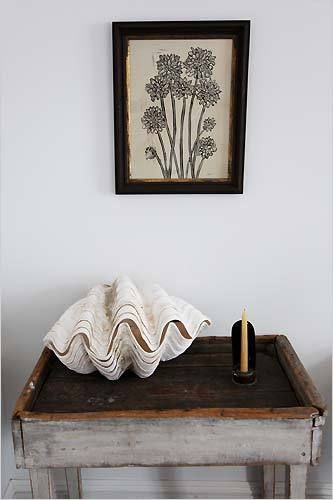 clam shell, table, art