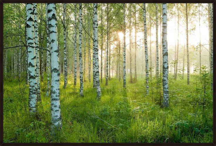Birkenwald 3 - André Wagner - Bilder, Fotografie, Foto Kunst online bei LUMAS