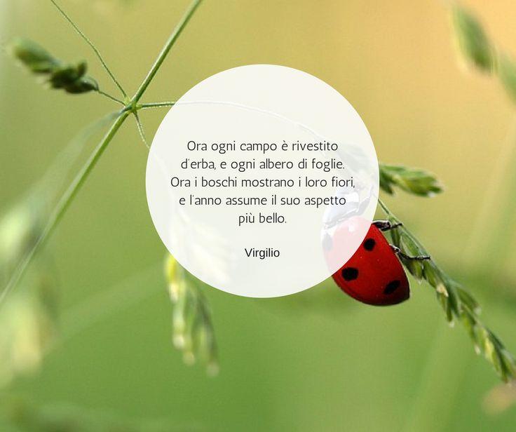 Quote by Virgilio #quotes #quote #aforismi #nature #natura #flowers #citazioni #naturequotes #Virgilio