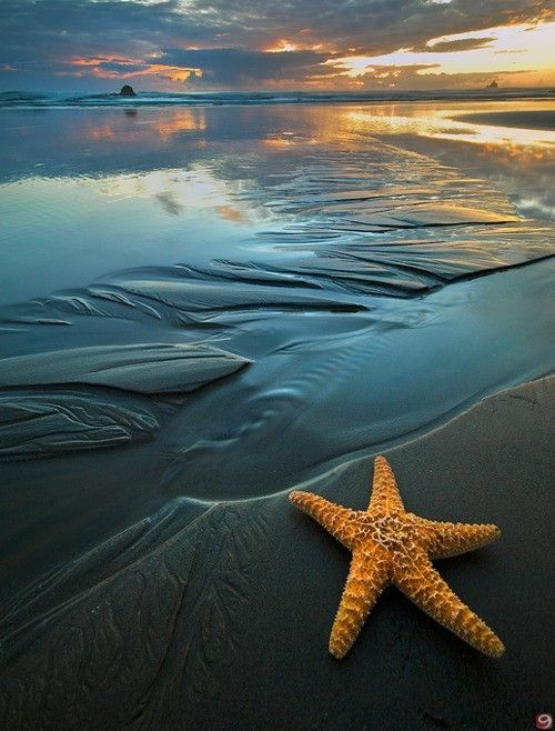 Sunset, beach and starfish