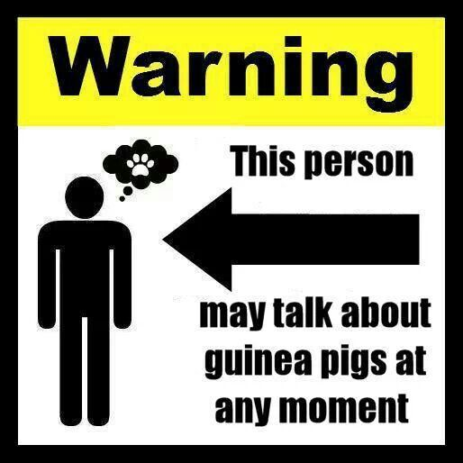 Warning: This person may talk about guinea pigs at any moment.