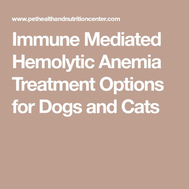 Immune Mediated Hemolytic Anemia Treatment Options for Dogs and Cats