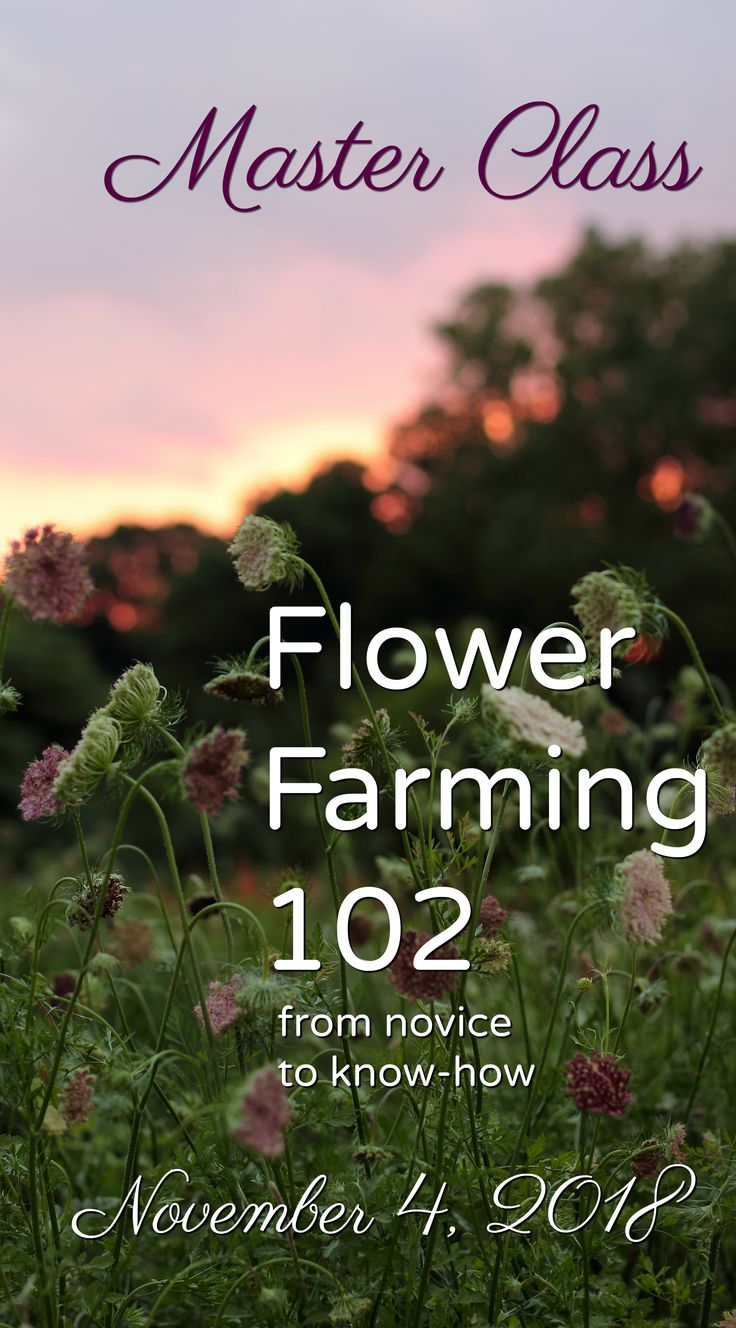 Flower Farming 102: From Novice to Know-How.  A Master Class experience hosted by Love 'n Fresh Flowers in Philadelphia.  Click for more info and to sign up!  #flowerfarm #farmerflorist #flowerworkshop #floraldesign