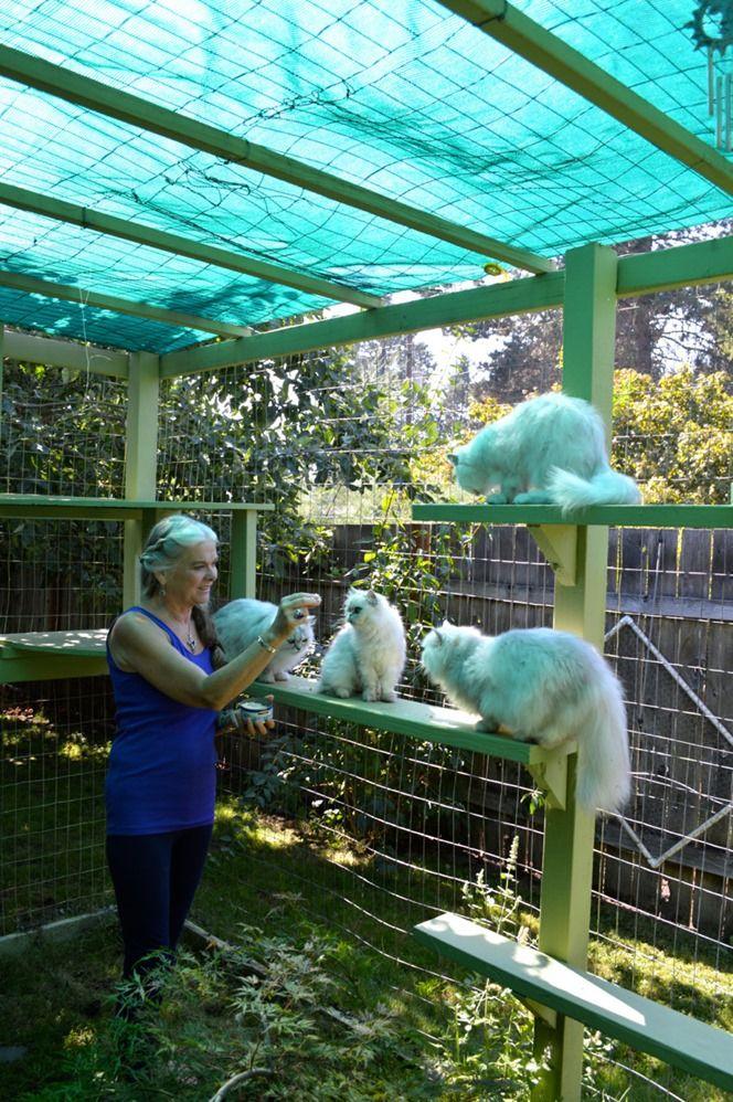 100 best the farmhouse // cat enclosure ideas images on pinterest ... - Cat Patio Ideas