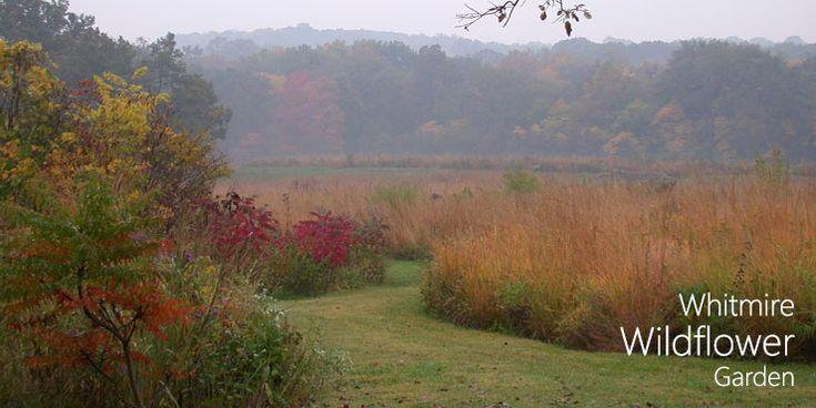 Whitmire Wildflower Garden-Shaw Nature Reserve--Gray Summit, MO