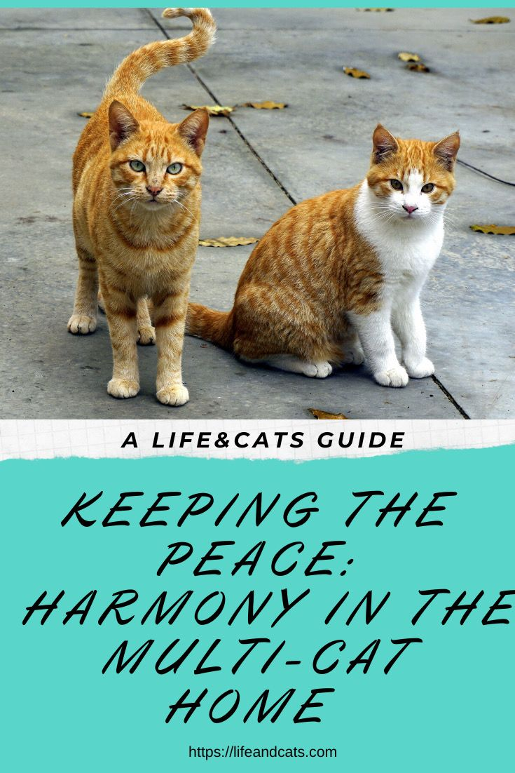 Tips For Creating Harmony In Your Multi Cat Household Life Cats Kitten Care Cat Training Pet Care Dogs