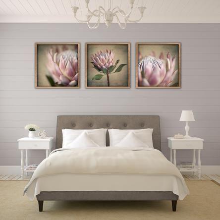 Protea Still Print Set | 3 | Fine Art Photography