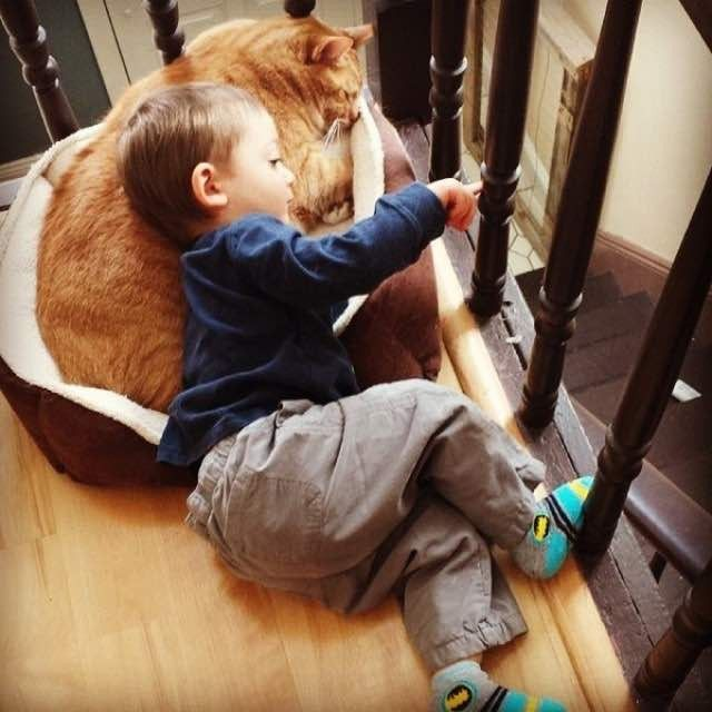 """A ginger cat named Larry was 'unwanted' by his precious owners, but when he met Abel, his little human, in his new home, he became his guardian and bestie for life.   Photo by Michelle @maluotto  """"I had always wanted an orange cat so when a friend's vet needed to get rid of 2 year old Larry for ..."""