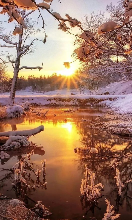 Golden winter sunset.