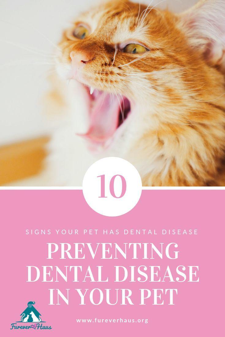 Dental Disease Prevention In Pets Cat Care Cat Health Raising Kittens