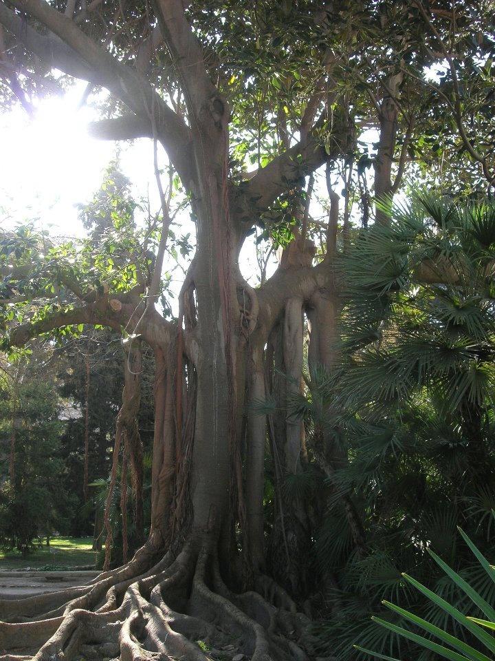 Botanical Garden in Cagliari Sardinia
