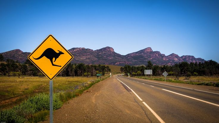 Kangaroos and emus everywhere. This road leads to our camping ground