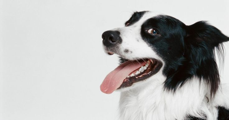 Dosis de famotidina para perros. Muchos medicamentos destinados a los seres humanos también pueden usarse para tratar a tus mascotas. Sin embargo, es muy importante que consultes a tu veterinario antes de administrar cualquier medicamento humano a tu perro o gato. Un medicamento inofensivo para ti puede ser mortal para un animal. La famotidina es un medicamento que, administrado ...