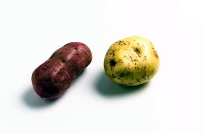 When to Plant Red Potatoes in Mississippi
