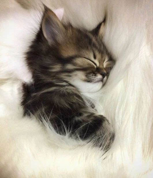 Dreamin about my hooman, oh yeah my hooman!