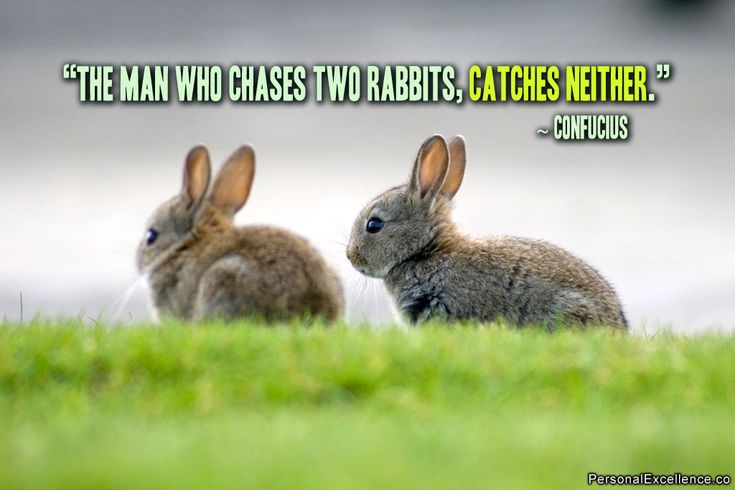 "Quotes About Rabbits: Inspirational Quote: ""The Man Who Chases Two Rabbits"