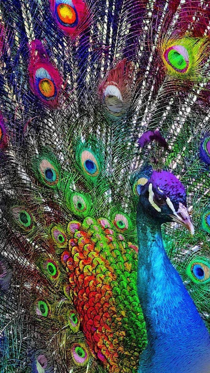 Colorful Peacock Wallpaper Iphone Peacock Wallpaper