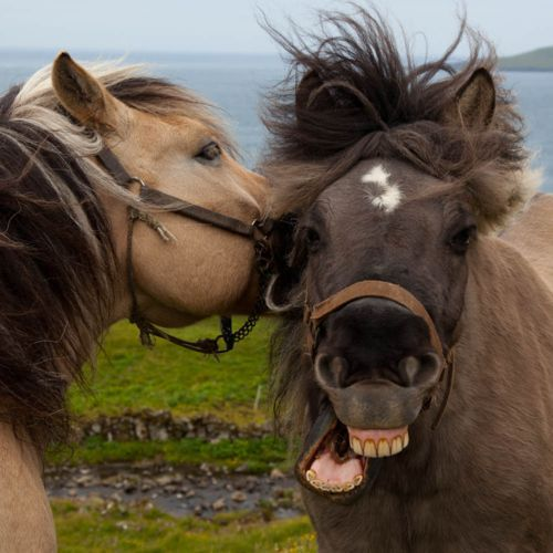 Smiling!Jokes, Horses, Funny Face, Funny Stories, A Kisses, Barns Doors, Funny Stuff, Smile, Animal