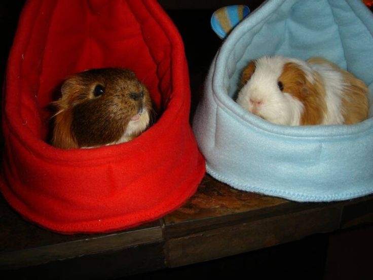 166 best images about guinea pig hotel on pinterest cavy for How to make a guinea pig bed