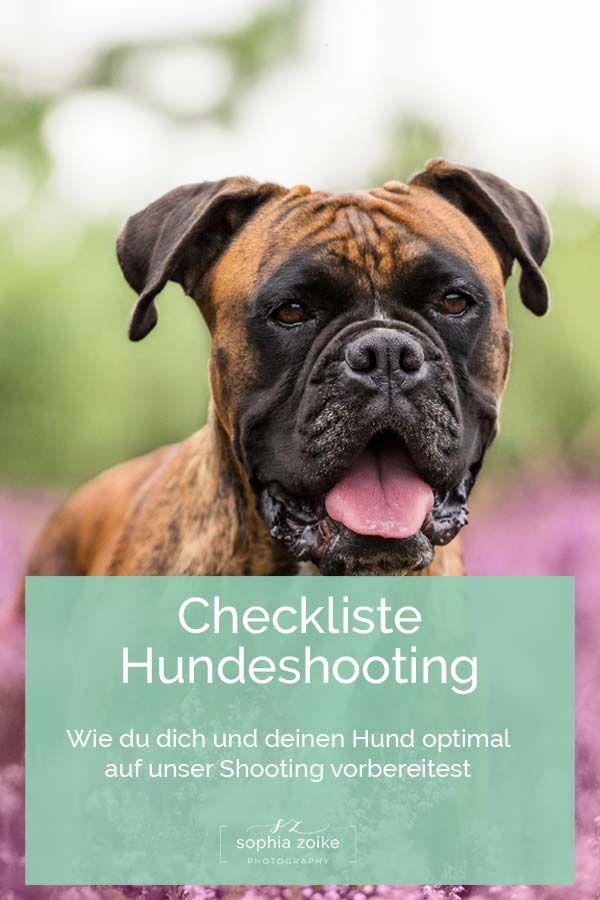 Checkliste Hundeshooting Sophia Zoike Photography Hundefotografie Hunde Fotos Hunde
