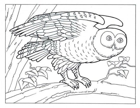 17 best images about animal coloring pages on pinterest dovers owl coloring pages and. Black Bedroom Furniture Sets. Home Design Ideas