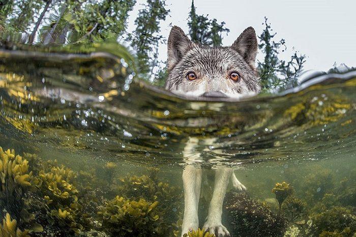 National Geographic 2015 - Algo Duvidoso, Costa da British Columbia, Canadá