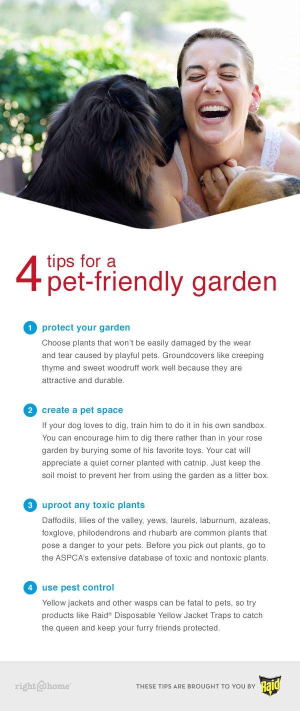 Dog Friendly Ways To Grow Grass