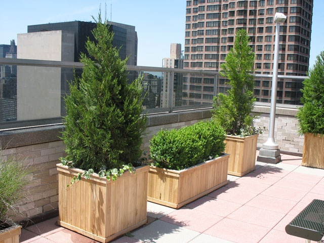 Shrubs And Small Trees Add Height Shade And Privacy To Nyc Urban Gardens Urban Garden Urban