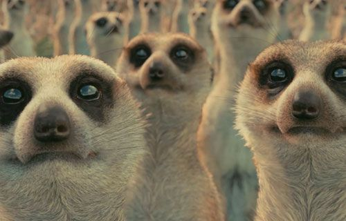 When Pi came upon the island, the meerkats were a big part of it, and they were vital to Pi. They provided a food source for Pi and Richard Parker, and they revealed the freshness of the water and the truth of the island.