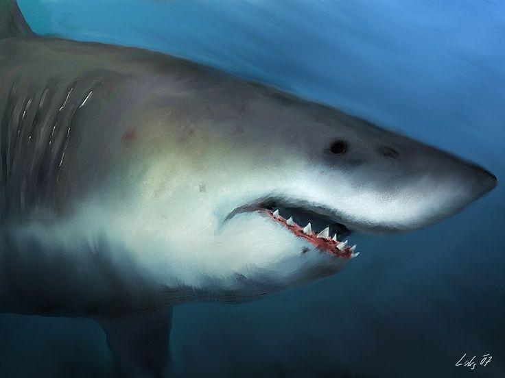 Shark.jpg (1024×768)